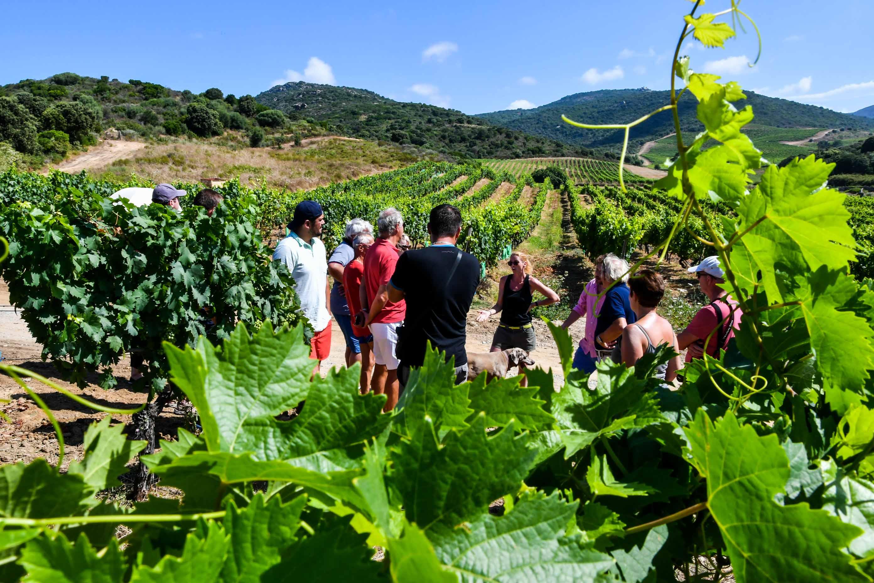 Domaine viticole Sartène. vin corse