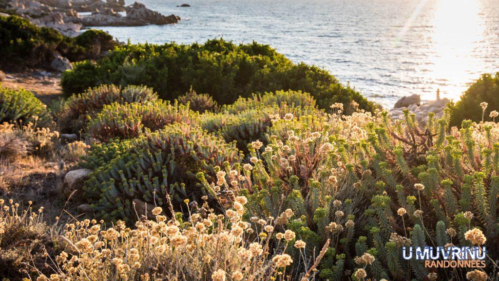 Balade sur le sentier du littoral à Campomoro